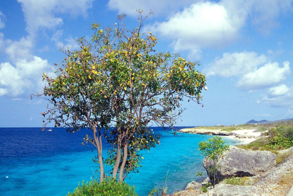 Marine Park, Bonaire
