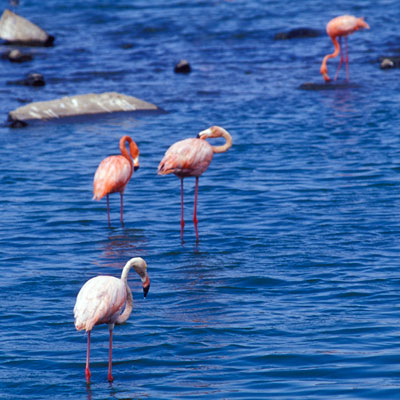 Flamingos im Washington Slagbaai Nationalpark, Bonaire