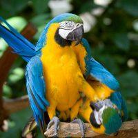 Vogelpark Parque das Aves an den Iguaçu-Wasserfällen auf der brasilianischen Seite