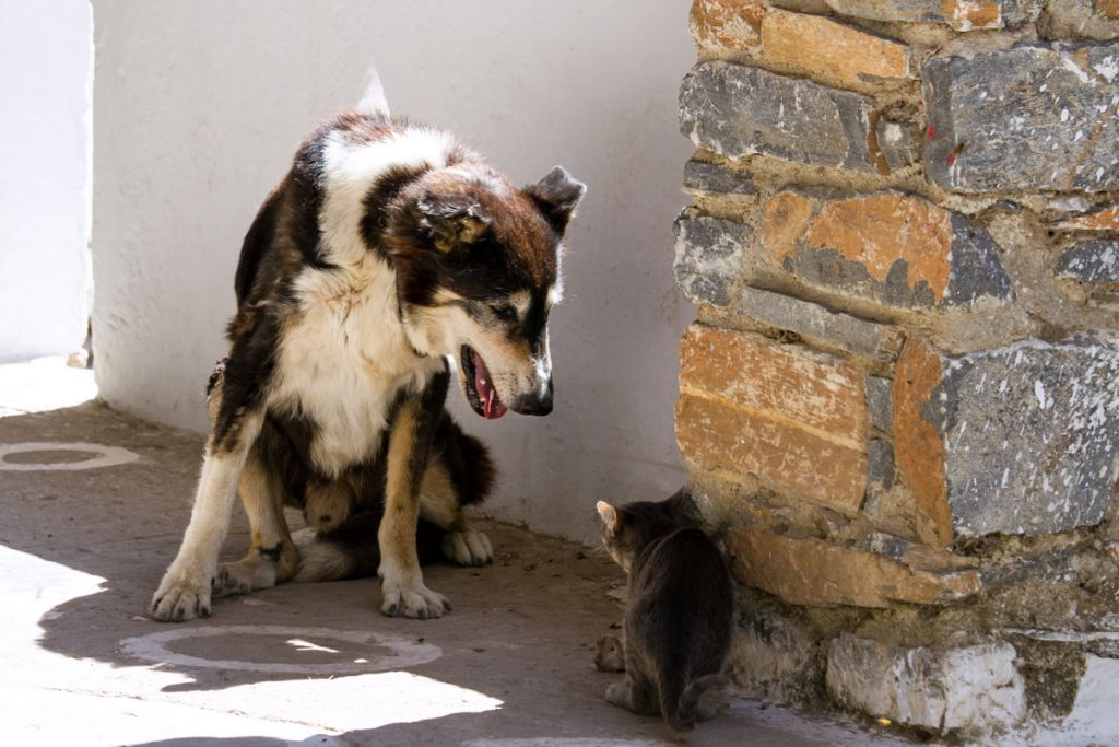 Begegnung auf Amorgos, Griechenland