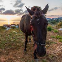 Morgendliche Begegnung über der Bucht von Alinda, Leros