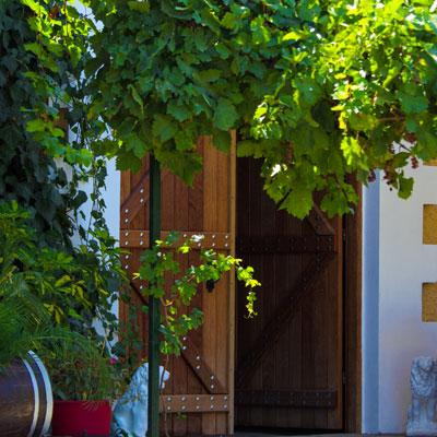 Weingut Palivou Estate in Nemea, Peloponnes