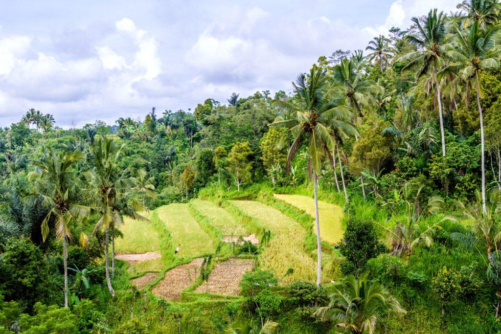 Reisterrassen sind typisch für das grüne Herz Balis