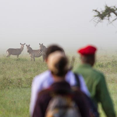 Fußsafari im Grumeti Game Reserve