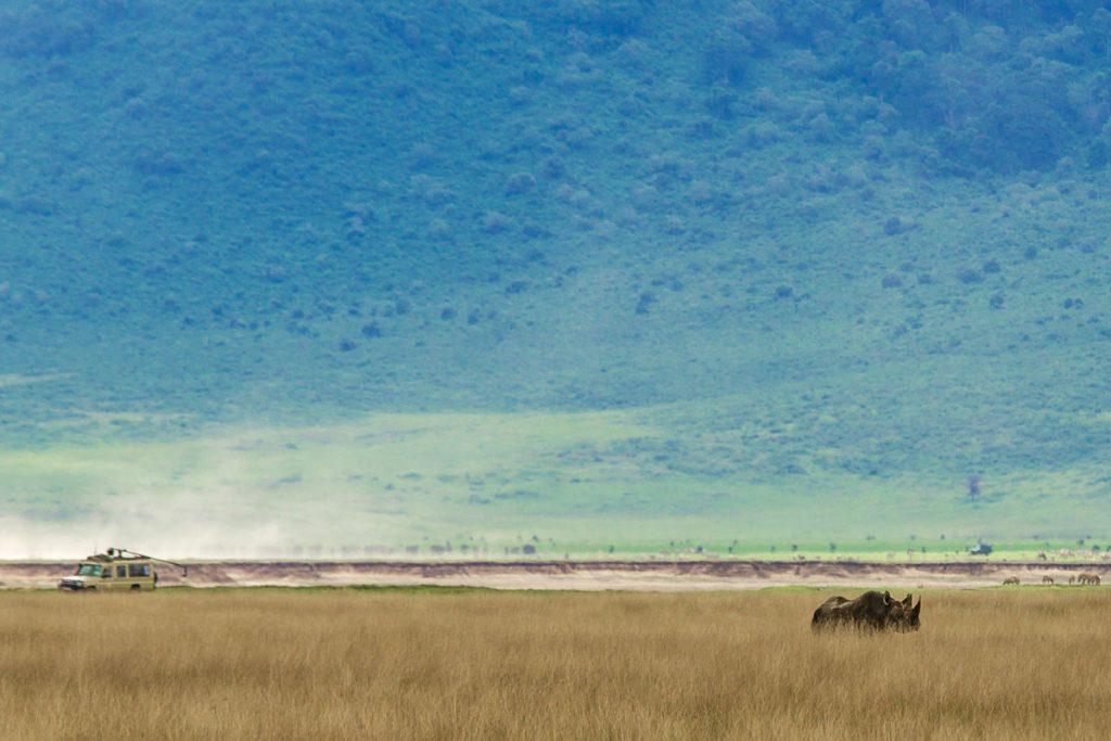 Ein Spitzmaulnashorn gibt sich die Ehre im Ngorongoro-Krater, Tansania