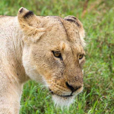 Tierparadies Ngorongoro-Krater