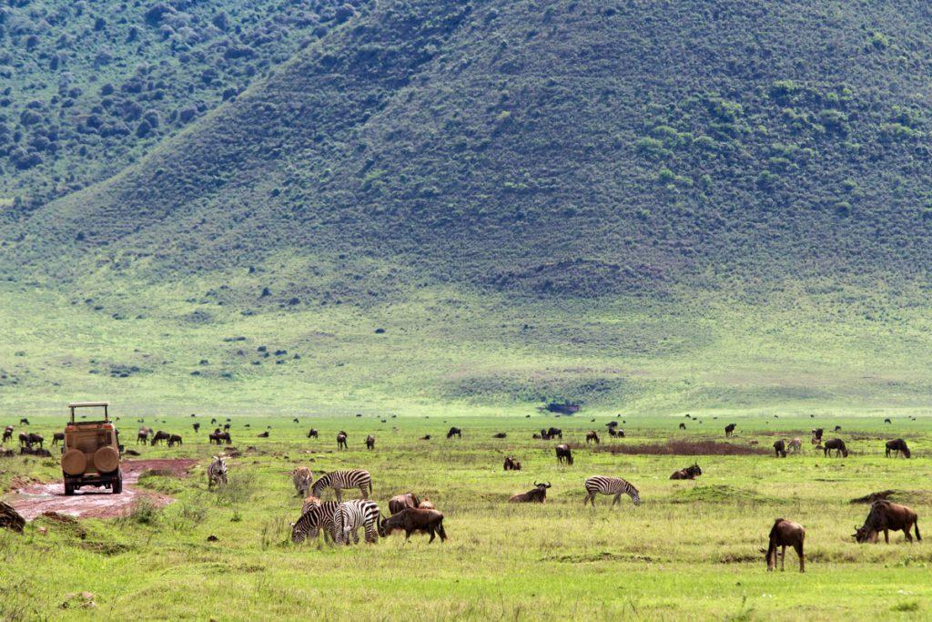 Zebras und Gnus im Ngorongoro-Krater, Tansania