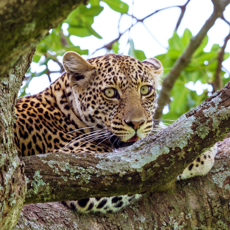 Serengeti-Besuch in der Regenzeit
