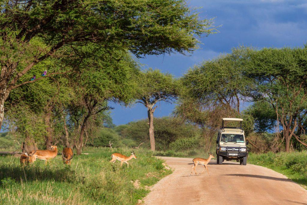Safari im Tarangire-Nationalpark, Tansania
