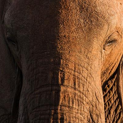 Elefant im Abendlicht des Tarangire-Nationalparks, Tansania