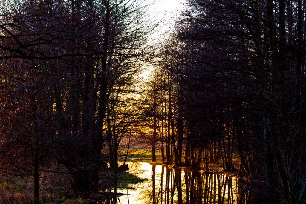 Spreewald nahe Lübbenau