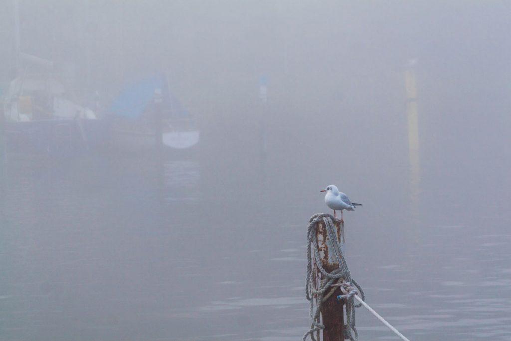 Morgennebel an der Zugbrücke von Greifswald-Wieck
