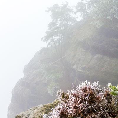 Die Sächsische Schweiz im winterlichen Nebel